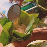 Recette de palusami: une délicatesse polynésienne